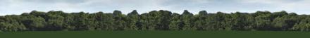 Tree skyline in Wonderland